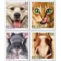 Кошки, собаки и др. домашние животные